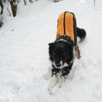 ふかふかの雪道散歩♪