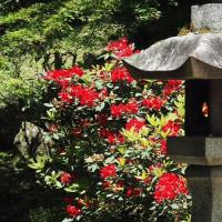 2017年5月23日(火) 姫路の名
