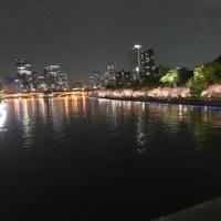 夜桜キレーイ