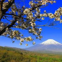 桜が満開でとてもきれい