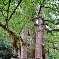 新居浜市の瑞応寺の紅葉はまだのようです