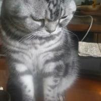 可愛い❤私の大好きな猫🍀😌🍀明ちゃん