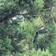 繁殖期終盤の夏鳥スポットのロケハンへ