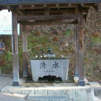 福島県二本松市、木幡の大杉(国指定天然記念物)です!!