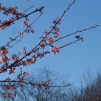 春近し…♪