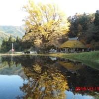 金言寺のイチョウと中国山地の紅葉見物。