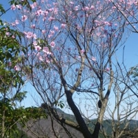 都県界の静かなピーク、日向沢ノ峰