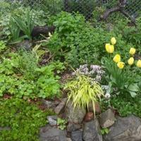 庭が賑やかになりました。