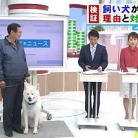 なぜ秋田犬は飼い主を嚙んだのか?