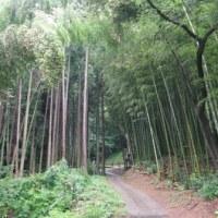 旅の記録 佐賀+++ ご神木