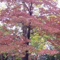 自然を感じてⅣ~紅葉の始まり~