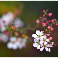 「自宅の庭に咲いた草花 」   (2の1)  ★ 2017.03.26 ★