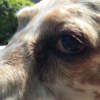 ウィリーの目