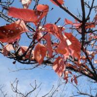 庭・・・枯れゆく秋