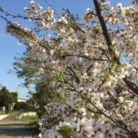 春はお花の季節 〜 桜編 〜