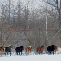 十勝牧場の馬追い・・4