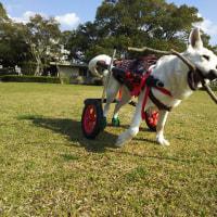番犬モード