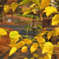 秋につつまれていた日。