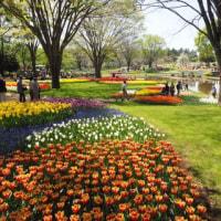 花咲き乱れる昭和記念公園へ