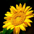 連載エッセイ しとせいかつ 第8回 夏、すりきず、焦げて図太い向日葵がすき   亜久津歩