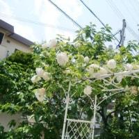 咲いちゃいました、みなさま(^u^) & レディでキュートなコート特集。