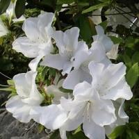 ちょっと珍しい花、見っけ(@_@)/🔔✨