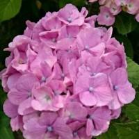 季節を彩る花々♪