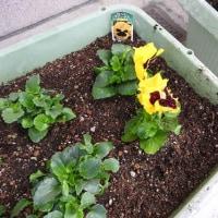 「つどい」前に花壇が新しくできました!