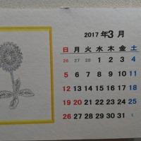 3月の大きな木