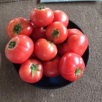 トマト  5ー24  水曜