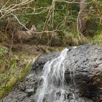 布ヶ滝に向かう林道沿いの無名滝