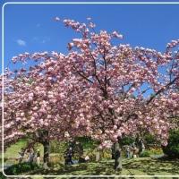 デジブック 『桜めぐり』 & ベトナム料理