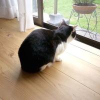 杉板の床と猫