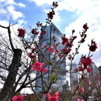 広角で見た桃の花は如何なのか❣️試して見たら面白い感じ❣️