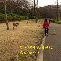夕方の散歩で久良岐公園へ
