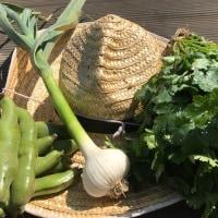 本日収穫分 農園野菜