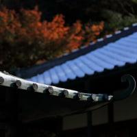 ●鎌倉 明月院 丸窓から初雪と紅葉 お寺の屋根に雪と紅葉 モミジ