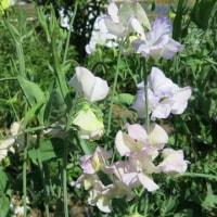 香りの庭が作りたくて、、、しかも四季折々に。