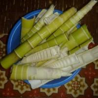 淡竹採りにまた行く