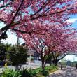 水元公園までサイクリング
