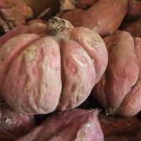 秋の酵母パン『焼き芋になったつもり』販売開始します。どうぞよろしくお願いいたします。