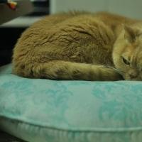 ◆新しい猫ベッド