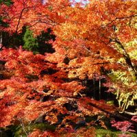 英彦山500号線界隈の紅葉(福岡県)