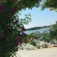 「季節を彩る千財農園の薔薇」