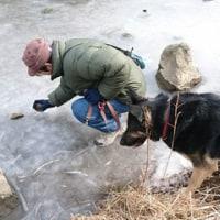 氷で遊ぶ一人と一匹