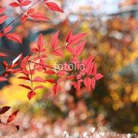 ナンテンの葉も季節が変わると彩りも変わる