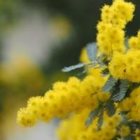 017 052     庭の花