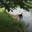 暑い日は川遊びに限りますな~