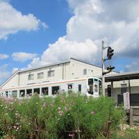 駅舎とコスモス