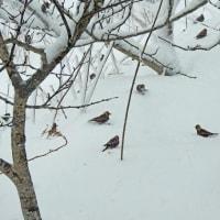 思いもかけぬ大雪にヘロヘロ